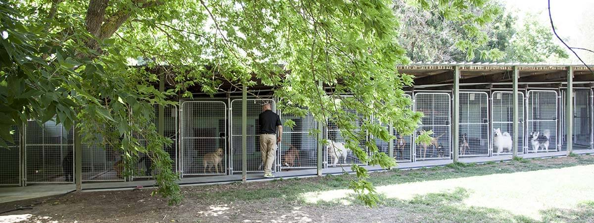 Dog Kennels Image 1