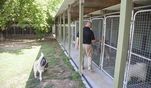 Dog Kennels Image 3