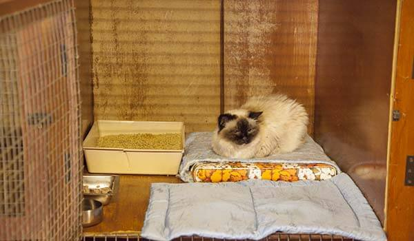 Cattery image 2