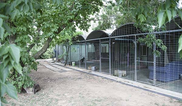 Dog Kennels Image 4